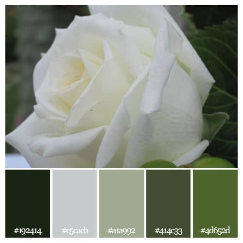 white rose color scheme