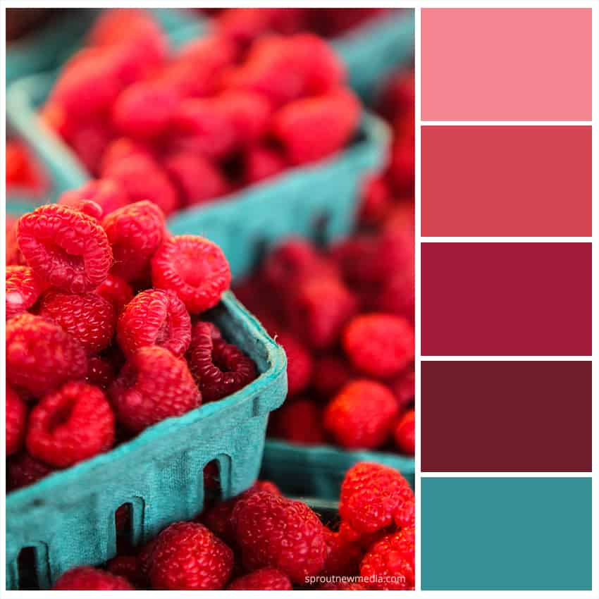 raspberry color scheme