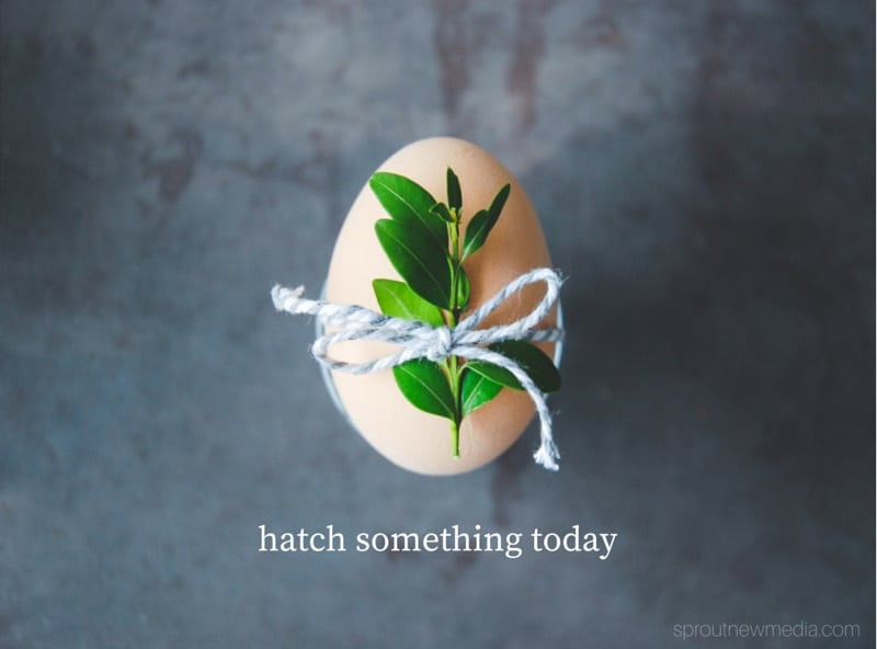 what will you hatch today?