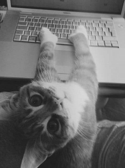 Cat-Doing-Email