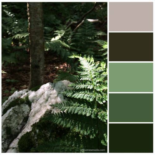 Color Inspiration: Forest Ferns