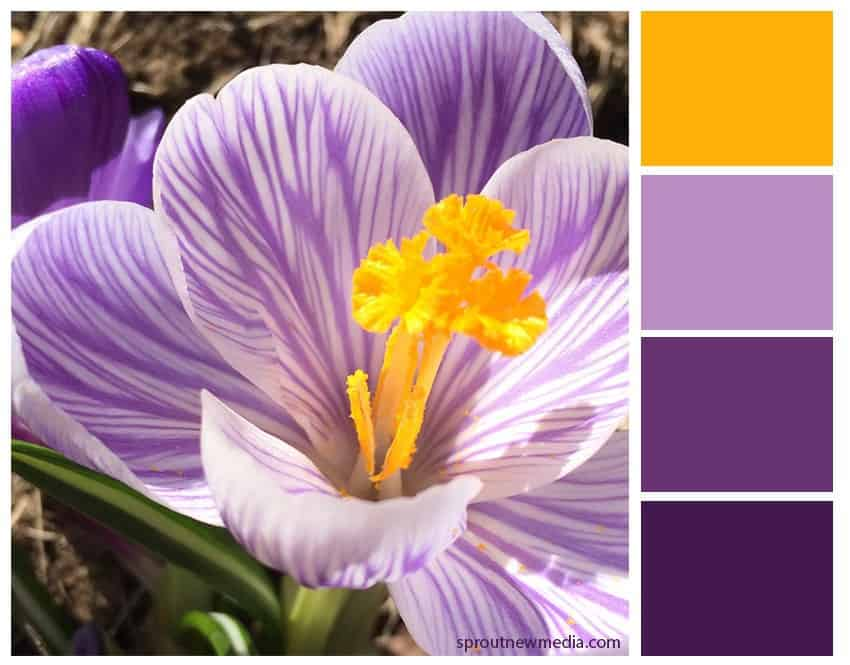 color inspiration spring crocus